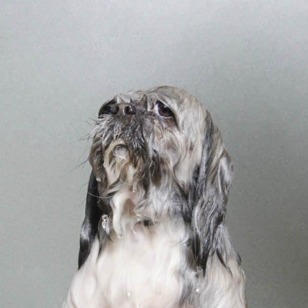 projeto-wet-dog-premiado-05