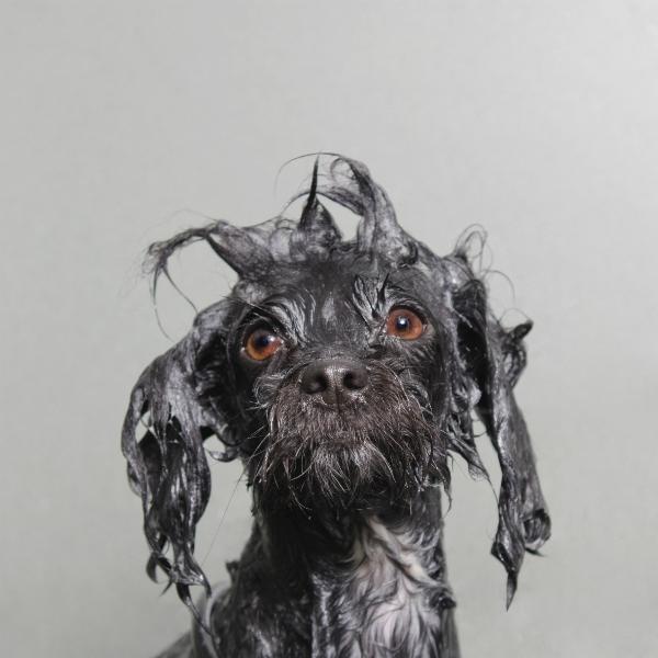 projeto-wet-dog-premiado-07