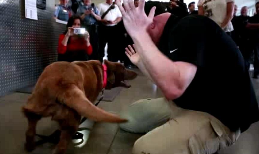 O veterano Jason Bos reencontrou a cachorra farejadora de bombas, Cila. (Foto: Reprodução / Chicago Tribune)