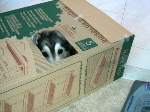 Tally, a cadela-gata. Foto: Reprodução