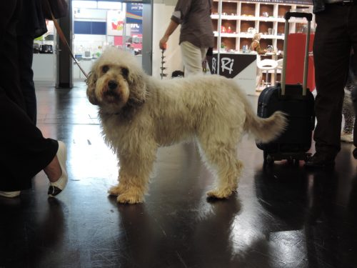 Foto: Fabio Sakita/Portal do Dog
