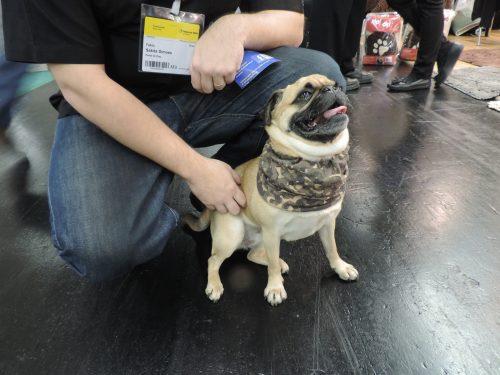Foto: Samantha Kelly/ Portal do Dog