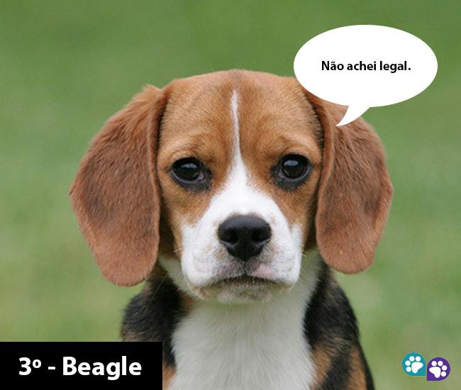 Montagem: Portal do Dog