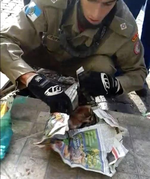 Os cachorrinhos estavam enrolados em folhas de jornal dentro de uma sacola.  (Foto: Reprodução / Facebook / Viviane João Vitor Ferreira)