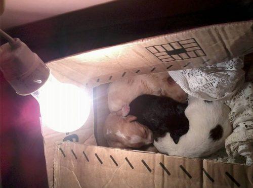 A veterinária Desi Machado está cuidando dos cachorrinhos. (Foto: Reprodução / Facebook / Desi Machado)