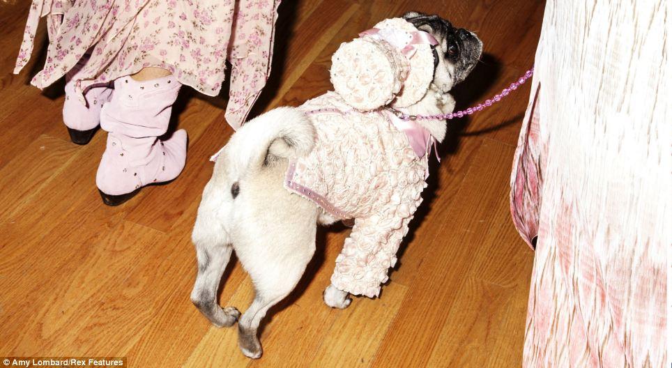 Os cães se arrumaram pro baile. (Foto: Reprodução / Amy Lombard / Daily Mail uk)