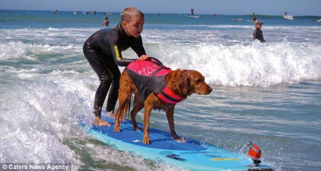 A cadela Ricochet usa seu talento para fazer o bem. (Foto: Reprodução / Daily Mail uk)