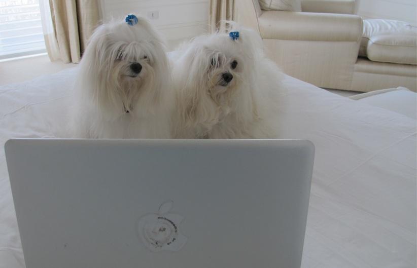 As cachorras de Luciana Gimenez: Lola e Sofia.