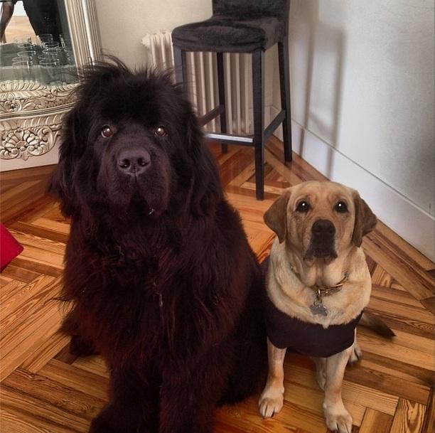 Lola e Nalla. (Foto: Reprodução / Instagram)
