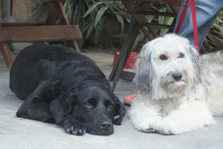 Os visitantes poderão tirar uma foto com as cadelas terapeutas Nega Maria e Bibiah. (Foto: Divulgação)