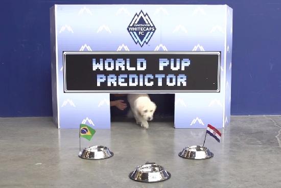 Cachorro faz previsões para os jogos da Copa do Mundo. (Foto: Reprodução / World Pup Predictor)