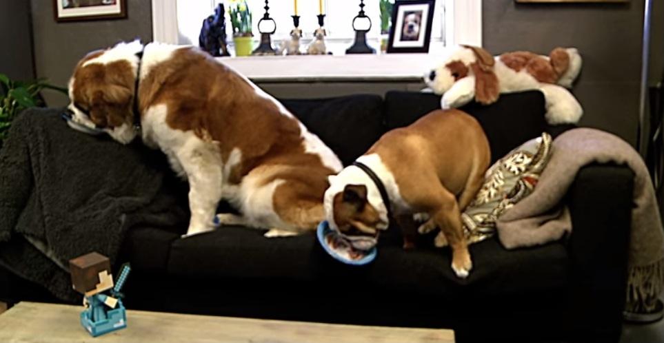 Igor conheceu uma nova amiga, Hera. (Foto: Reprodução / Youtube)