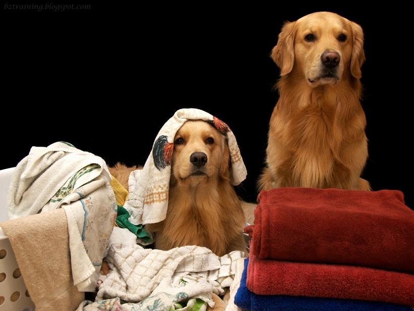 Separando a roupa suja ou brincando de esconde-esconde? (Foto: Reprodução / Google)