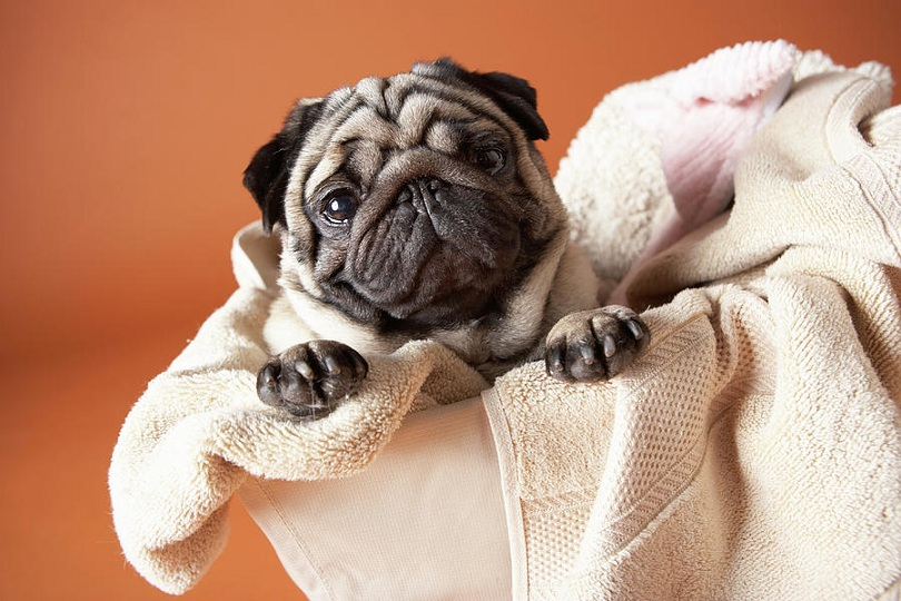 Cuidando da roupa suja ou querendo chamar a atenção? (Foto: Reprodução / Google)