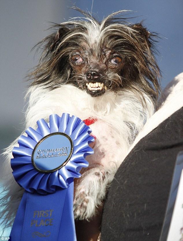 O vira-lata Peanut foi o vencedor de 2014. (Foto: Reprodução / Daily Mail uk)
