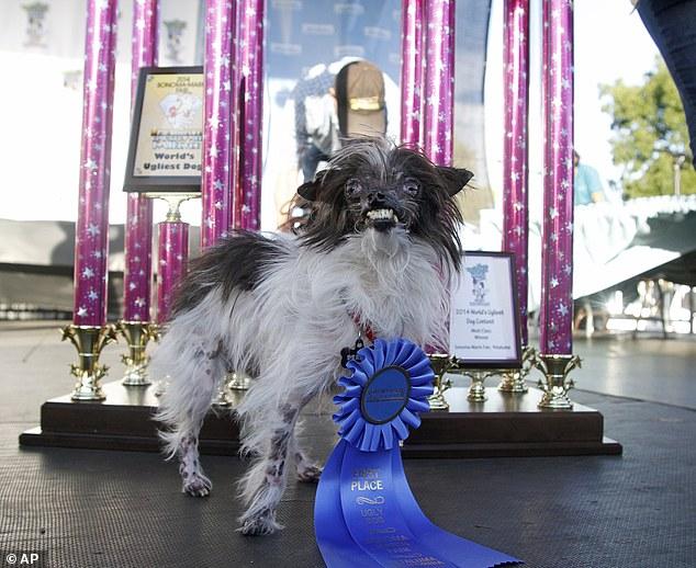 Peanut foi eleito o cachorro mais feio do mundo. (Foto: Reprodução / Daily Mail uk)