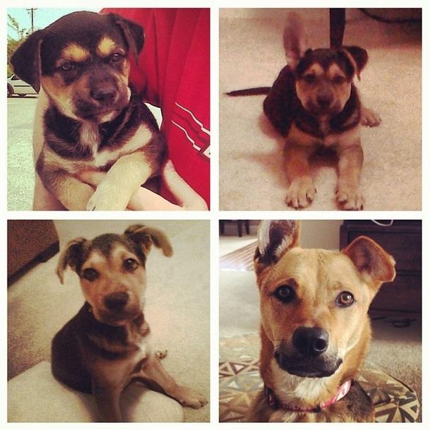 A evolução de Toby desde que foi adotado, ainda filhote, até os dias atuais. (Foto: Reprodução / Instagram)