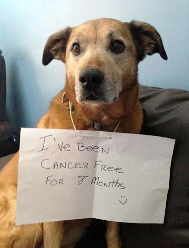 Dakota tem 10 anos de idade e está a 8 meses livre do câncer.