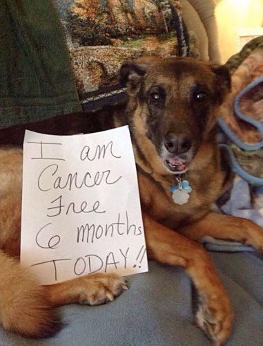 Outro cãozinho que venceu a doença. Segundo o recado, está a 6 meses sem câncer.