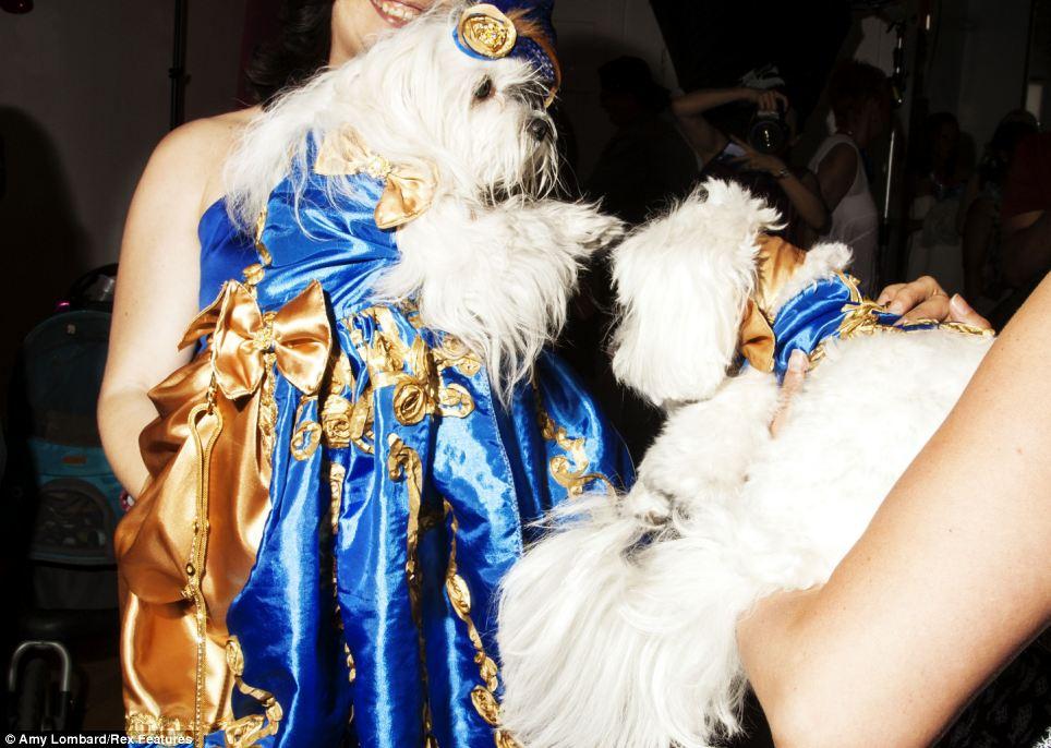 Cachorros participam de baile especial, o Puppy Prom 2014. (Foto: Reprodução / Amy Lombard / Daily Mail uk)
