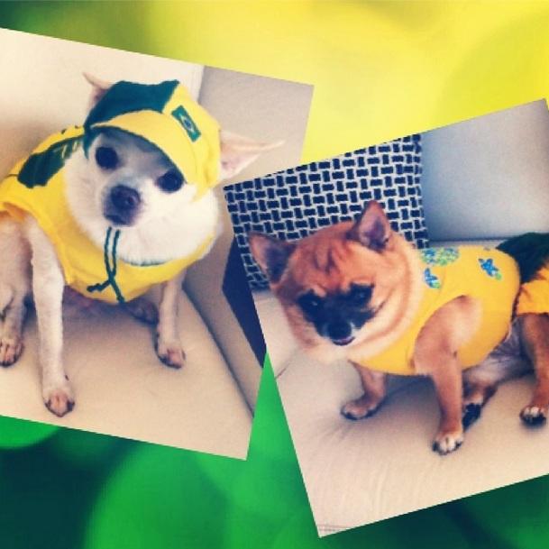Cachorros de Deborah Secco torcendo pelo Brasil. (Foto: Reprodução / Instagram)