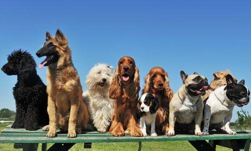 A felicidade dos cachorros é tão importante quanto a nossa. (Foto: Reprodução / Google)