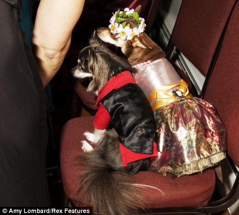 Muitos cachorros foram acompanhados ao baile. (Foto: Reprodução / Amy Lombard / Daily Mail uk)