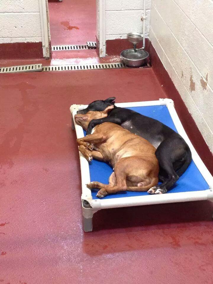 Imagem de cadelas dormindo juntos em abrigo toca internautas. Foto: Reprodução