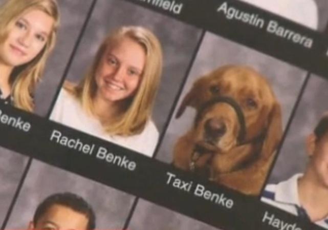 O cão de serviço, Taxi Benke, ganhou sua própria foto no anuário escolar. (Foto: Reprodução / kens5.com)
