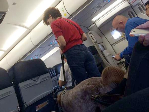 Avião fez pouso de emergência depois que um cão-guia defecou. (Foto: Reprodução / philly.com / Twitter)