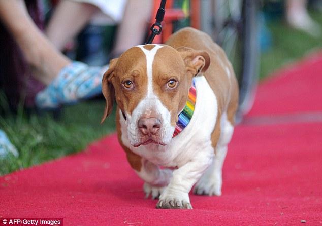 O cão Wally foi o vencedor de 2013. (Foto: Reprodução / Daily Mail uk)