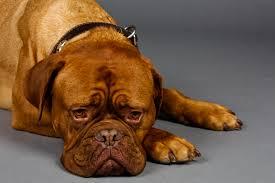 Dermatofitose Canina. Foto: Reprodução