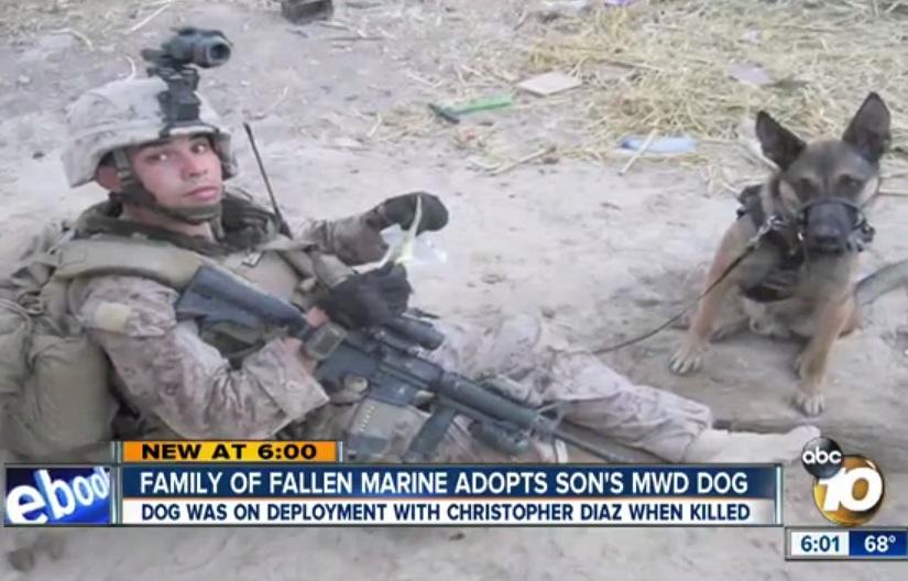Christopher Diaz em combate com o cão Dino. (Foto: Reprodução / The Indy Channel)