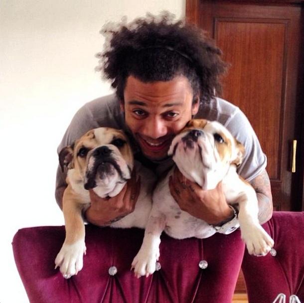 Marcelo com Thaig e Kiara, da raça Buldogue Inglês. (Foto: Reprodução / Instagram)