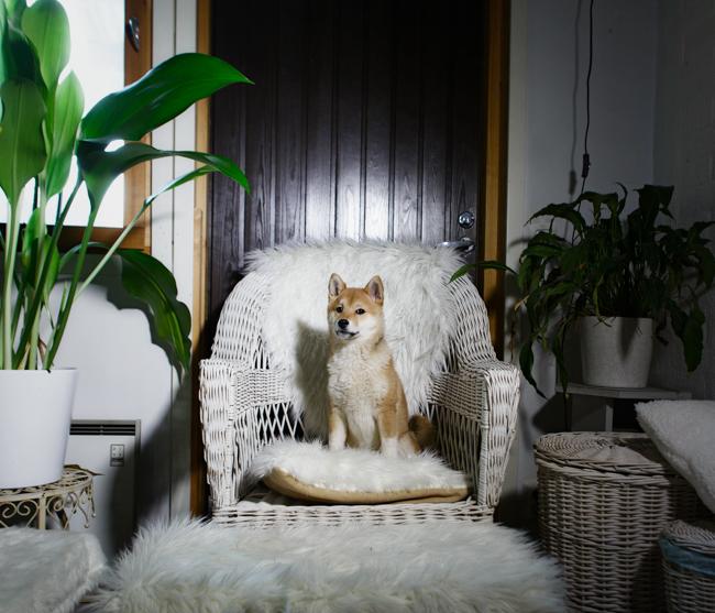 Foto: Reprodução / Site Maija Astikainen