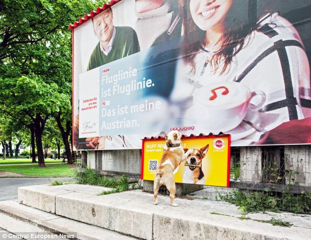 Cachorro perto de outdoor com cheiro de petisco. (Foto: Reprodução / Daily Mail uk)