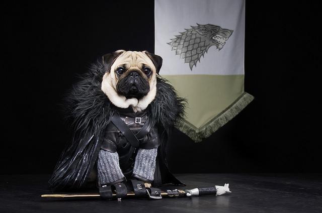 Jon Snow. Foto: Reprodução/Flickr
