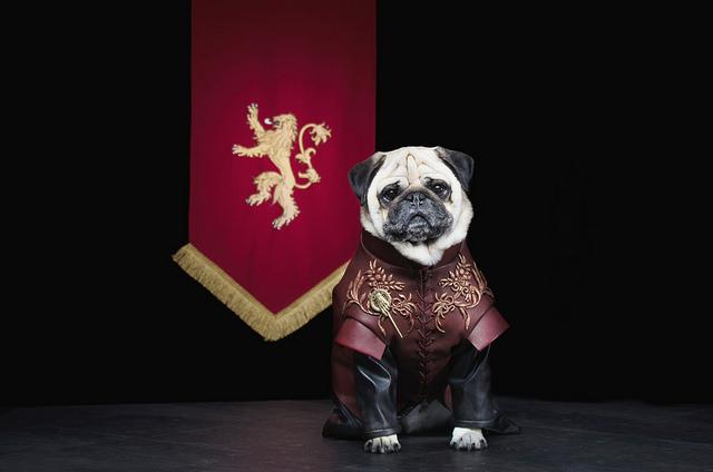 Tyrion Lannister. Foto: Reprodução/Flickr