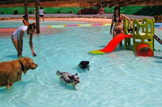 Um resort para cachorros foi criado na Espanha. (Foto: Reprodução / Metro UK)