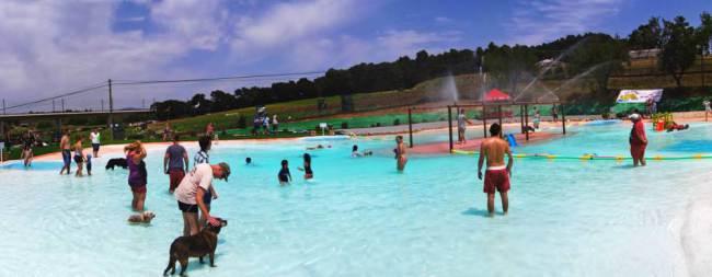 Os cães se divertem na piscina. (Foto: Reprodução / Metro UK)