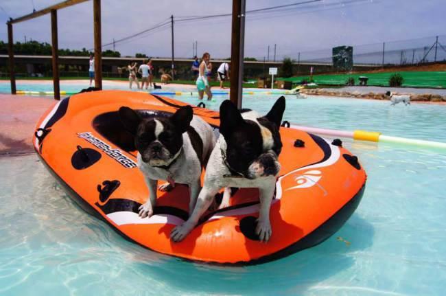 Cães se divertindo na boia. (Foto: Reprodução / Metro UK)