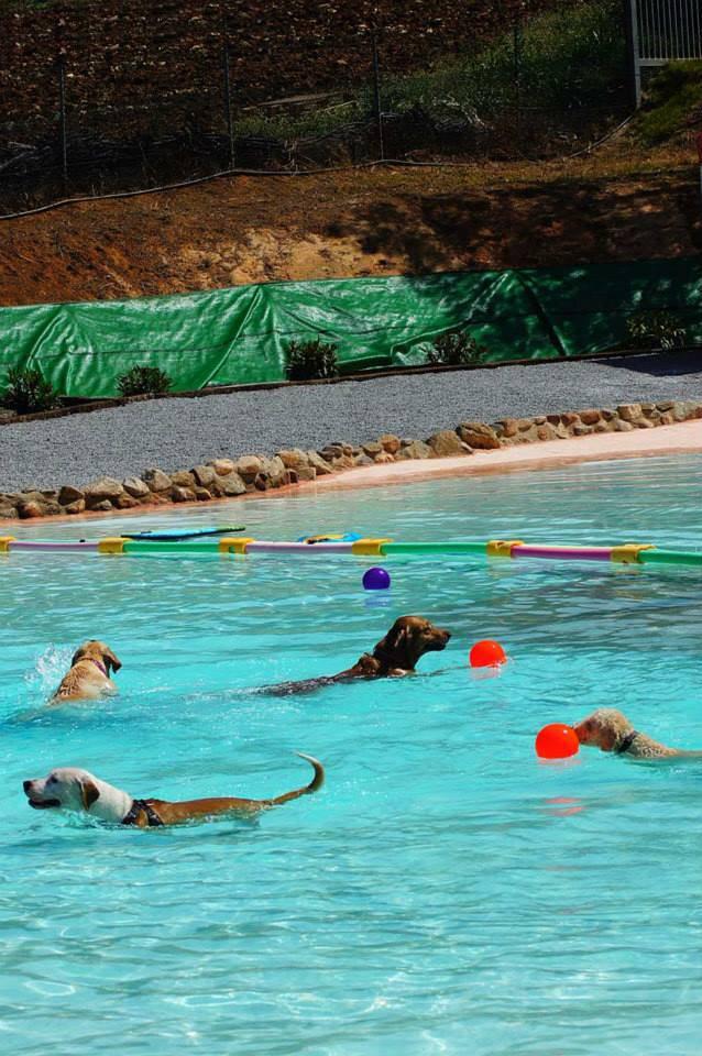 Cachorros no Resort Canino Can Jane. (Foto: Reprodução / Metro UK)
