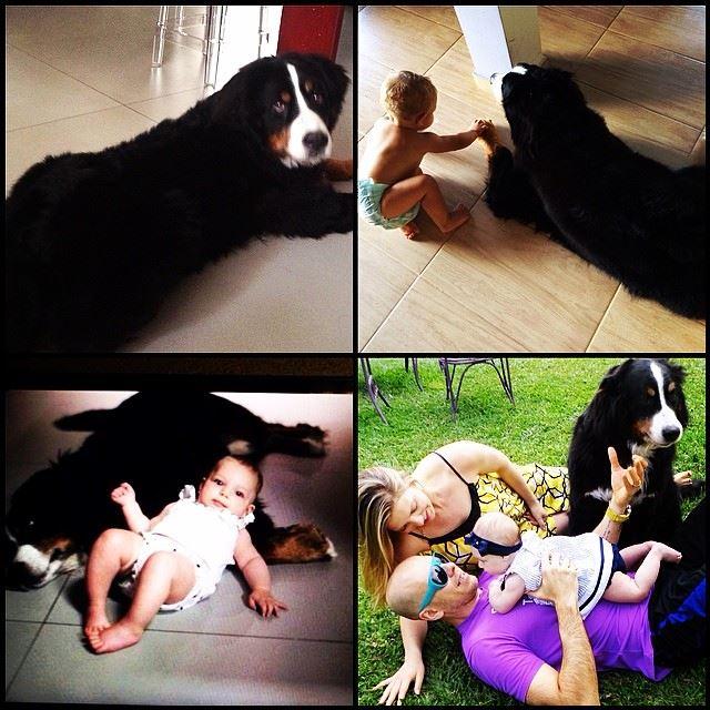 Sheila Mello mostrou fotos de momentos especiais com o cão Mike. (Foto: Reprodução / Facebook)