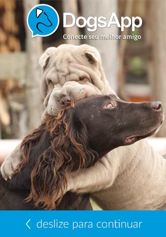 DogsApp é uma espécie de Tinder para cachorros. (Foto: Divulgação)