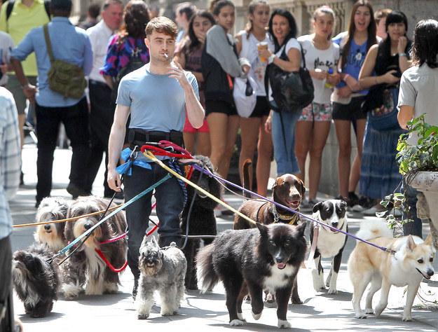 Daniel-Radcliffe-passeando-cachorros-01