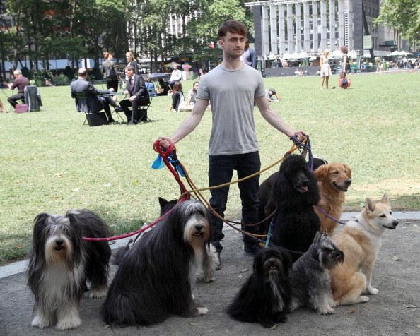Daniel-Radcliffe-passeando-cachorros-02