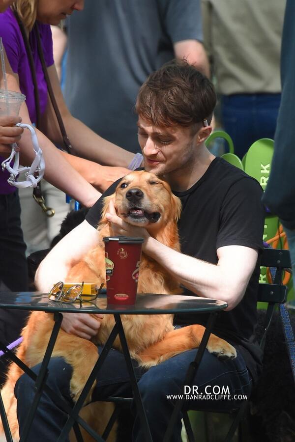 Daniel-Radcliffe-passeando-cachorros-03