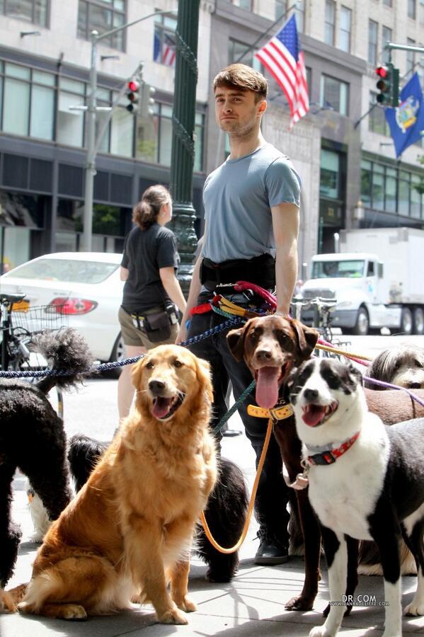 Daniel-Radcliffe-passeando-cachorros-04
