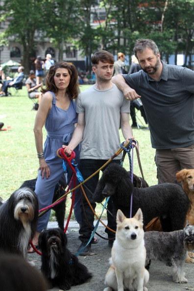 Daniel-Radcliffe-passeando-cachorros-05