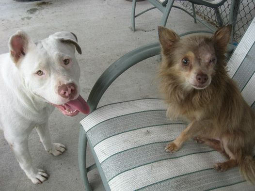 Amizade e companheirismo entre cães emocionou os policiais da cidade. (Foto: Reprodução / Facebook / Savannah-Chatham Metropolitan Police Department)